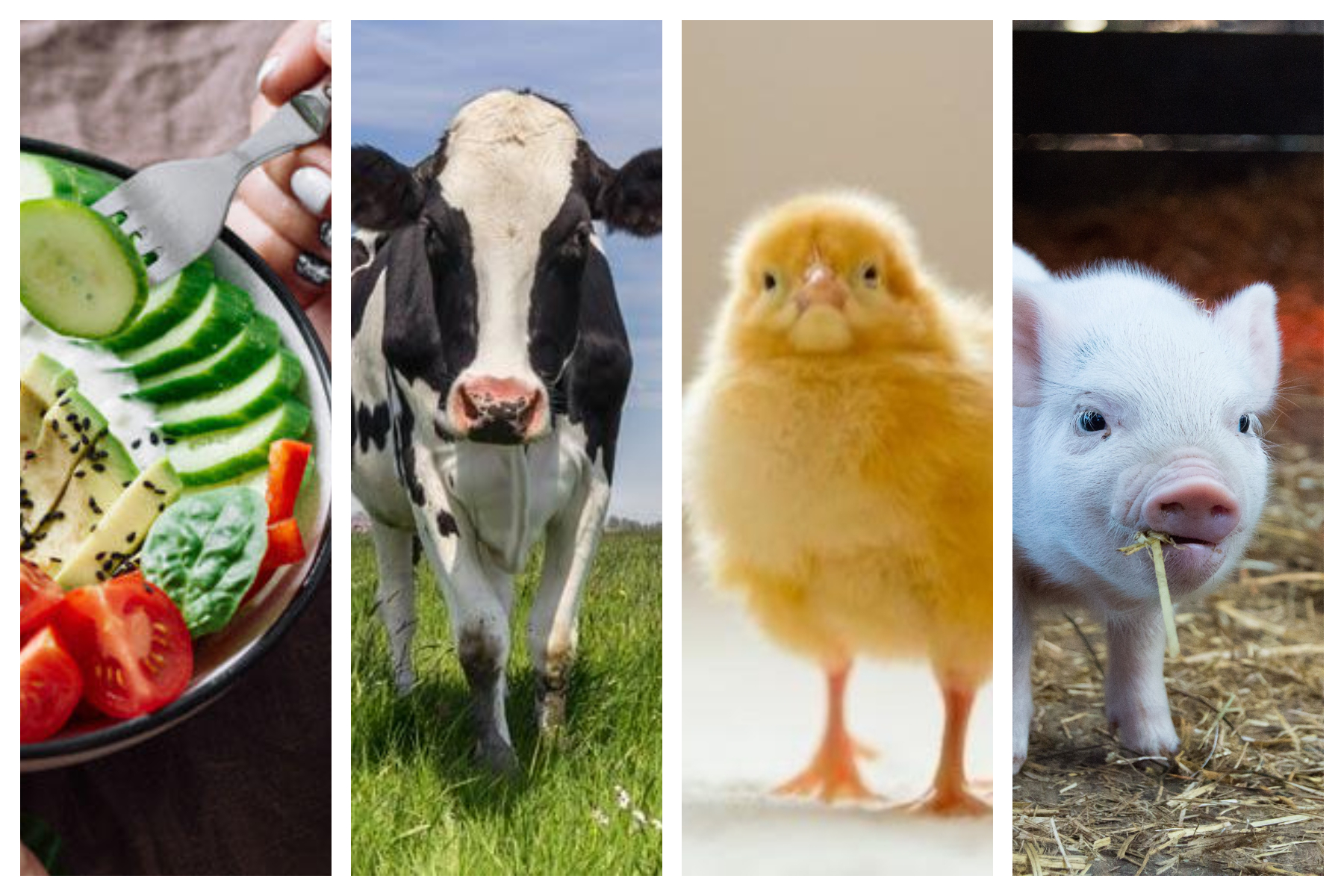 Por que ser Vegano